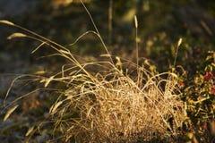 Trawy rośliny szczegół strzelający w jesieni Fotografia Royalty Free