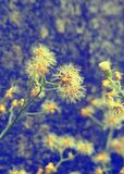 Trawy roślina zdjęcie royalty free