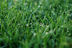 trawy rosy wiosny Zdjęcia Royalty Free
