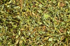 Trawy rosy wysuszeni ziele Zdjęcie Royalty Free