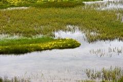 trawy rzeka Zdjęcia Stock