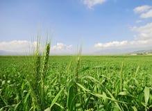 trawy słońce Zdjęcia Royalty Free