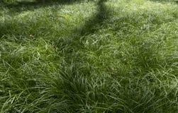 Trawy struktura dla use jako tło zdjęcie royalty free
