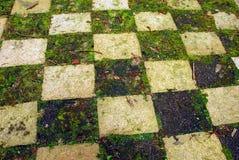 Trawy szachownica fotografia stock