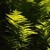 trawy tła świeżej green Obrazy Royalty Free