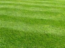 trawy tła green zdjęcia royalty free