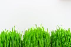 trawy tła zielone świeżego white Obrazy Stock
