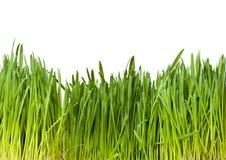 trawy tła zielone ilustracyjny white wektor Zdjęcie Stock