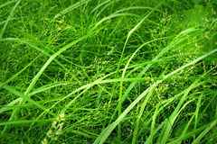 trawy tła green Fotografia Royalty Free