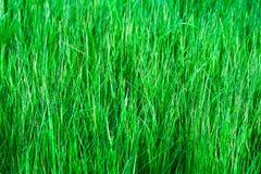 trawy tła green Fotografia Stock
