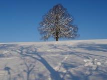 trawy tła odosobnionej charakteru wektor white dziewicy Obrazy Royalty Free