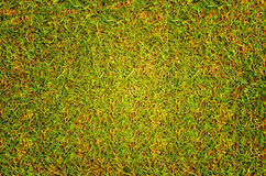 Trawy tła tekstury gazon pole golfowe Zdjęcie Royalty Free