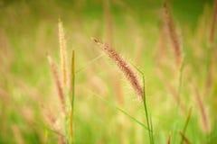 Trawy tła wizerunek Fotografia Stock