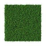 trawy tekstura Obraz Royalty Free