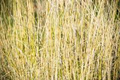 Trawy tekstura fotografia stock