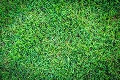 Trawy tekstura lub trawy tło zielona trawa dla pola golfowego, boisko do piłki nożnej lub sporta tła pojęcia projekta, Obrazy Royalty Free