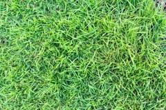 Trawy tekstura lub trawy tło zielona trawa dla pola golfowego, boisko do piłki nożnej lub sporta tła pojęcia projekta, Zdjęcia Stock