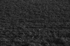 Trawy tekstura od pola w wiośnie, projektów szczegóły Zdjęcia Stock