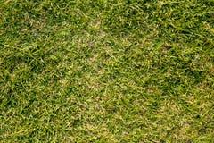 Trawy tekstury tła Zdjęcie Royalty Free