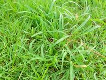 Trawy w parku Zdjęcia Royalty Free