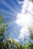trawy widok nieba widok Zdjęcie Stock