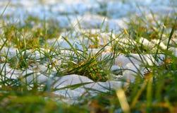 trawy wiosna Zdjęcie Royalty Free