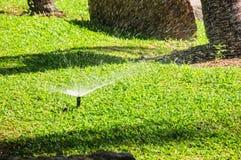 Trawy wiosny ogrodowa woda Obraz Stock