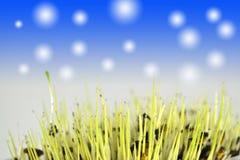 Trawy wody krople Obraz Royalty Free