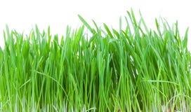 trawy zieleń zdjęcia stock