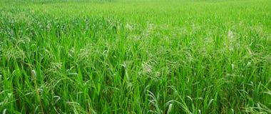 trawy zieleń Obrazy Stock