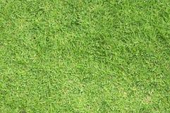 trawy zieleń obraz royalty free