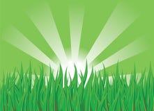 trawy zieleń royalty ilustracja