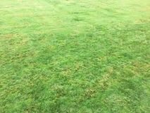 Trawy zieleń pojedynczy białe tło trawy Naturalna zielonej trawy tekstura, Naturalny zielonej trawy tło dla projekta z kopii prze Fotografia Stock