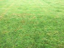 Trawy zieleń pojedynczy białe tło trawy Naturalna zielonej trawy tekstura, Naturalny zielonej trawy tło dla projekta z kopii prze Fotografia Royalty Free
