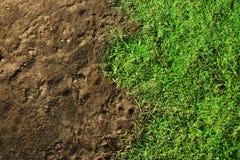 trawy zieleń Zdjęcie Stock
