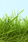 trawy zieleń Zdjęcie Royalty Free