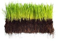 trawy zieleń