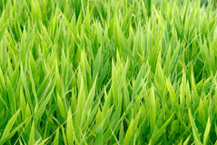 trawy zieleń Obrazy Royalty Free