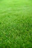 trawy zieleń Zdjęcia Royalty Free