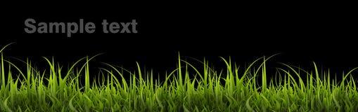 trawy zieleń Obraz Stock