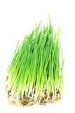 trawy zieleń fotografia royalty free
