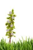 trawy zieleni narastający pieniądze drzewo zdjęcia royalty free