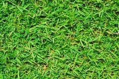 Trawy zieleni natura Obrazy Royalty Free