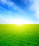 trawy zieleni niebo