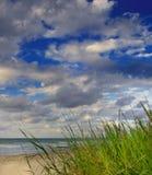 trawy zieleni ocean zdjęcia royalty free