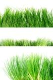 trawy zieleni set Zdjęcie Royalty Free