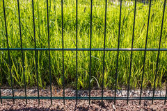 Trawy zieleni słońca świezi iluminujący promienie są za metalu ogrodzeniem Zdjęcie Royalty Free