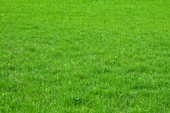 trawy zieleni tekstura Zdjęcie Stock