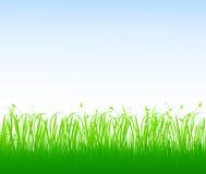 trawy zieleni wektor royalty ilustracja