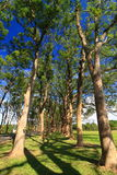trawy zieleni ziemi drzewo Obraz Royalty Free